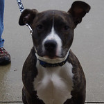 Marley, Friendship APL of Lorain County