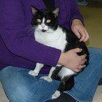 Tux, Friendship APL of Lorain County