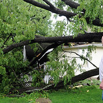 Dana Bishop looks over damage from the fall of a 100 year old black walnut tree on his mother's home in Eaton Twp. on July 10.  The homeowners are Fay and William Earl of Rt. 82 in Eaton Twp …