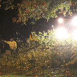 An Elyria street Department crew uses a front end loader to lift and push huge sections of downed trees out of the roadways duriong the storm overnight. This crew was on Hamilton Ave. in Ely …