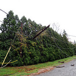 Utility lines down on Baldwin Blvd. in Lorain from down tree on Oct. 30.  Steve Manheim