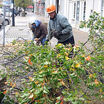 Jeff Bartolome, front, and Scott Hector, of EcoTree Service in Amherst, remove a tree they cut down due to the storm damage on Middle Ave. on Oct. 30.  Steve Manheim