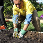 Leon Bibb, of NewsChannel 5, plants flowers in a community garden on S. Maple St. for Building Better Communities on Sep. 28.  Steve Manheim