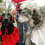 Bark for Life Costume contest. What a long nose you have Grandma (played by Millie) said red Ridding Hood (played by Chloe). Both dogs are owned by Michelle Miller of Wellington. Whatever ha …