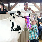 Madison Lewis, of Oberlin, holds her Grand Champion Dairy Steer during the 2014 Lorain County Junior Fair Livestock Sale. ANNA NORRIS/CHRONICLE