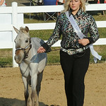 Taylor Prebish of Avon shows 'Bits' during the Miniature Horse Princess contest on Monday. STEVE MANHEIM/CHRONICLE