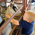 Jacob Walker, 3, of Lagrange, pets a goat in the remodeled goat barn at Lorain County Fair on Monday. STEVE MANHEIM/CHRONICLE