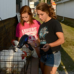 Ivana DeVengencie, 16, of Grafton, and Yazminka Morgan, 16, of Amherst, prepare DeVengencie's chickens for auction by giving them a bath on Aug. 20.  KRISTIN BAUER | CHRONICLE