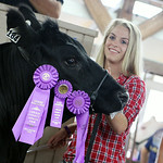 Shelby Fortune, of Grafton, steadies her grand champion Lottery steer during the 2014 Lorain County Junior Fair Livestock Auction Saturday morning. ANNA NORRIS/CHRONICLE