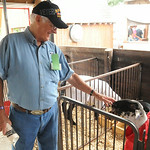 Vic Long, a 40-year Junior Fair volunteer, walks through the goat barn.  STEVE MANHEIM/CHRONICLE
