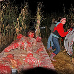 10/17/09 Novotny Farm Market Rt 60 Vermilion, Ohio Holowen Corn Maze. These girls have just been surprised by the Chain Saw man.  In red is Ashlynn Yost of Wakeman. Photo by Tom  Mahl