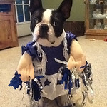 Izzy is a shoe-in for the Dallas Cowboys Cheerleaders, but her owners would prefer her in Bengals' colors.
