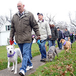 Several hundred dog owners march in a 'Justice for Herbie' dog walk, leaving Streator Park to Veterans Memorial Park in Lorain on Dec. 9.  The walk calls attention to  animal abuse and negle …