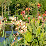 Landscaping award / Miller Nature Preserve and Conservatory