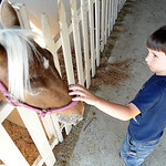 Alex Enderby, 5, of Elyria, pets a pony in the pony barn at Lorain County Fair on Aug.21.  Steve Manheim