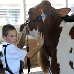 Clay Gunkelman, of Medina, takes first place in the open class dairy judging at Lorain County Fair Aug. 21.  Steve Manheim