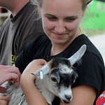 Kayla Mackey of Kipton pets Kylie, a pygmie goat, owned by Alex Sabine, at the Lorain County Fair Aug. 24  Steve Manheim