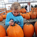 Philip St. Aubyn, 9, of North Ridgeville, picks out a halloween pumpkin with his mother Lisa, in rear, at Fitch&#039;s Farm Market on Rt. 83 in Avon on Oct. 13.  There are wagon rides at Fitch&#039;s  &#8230;