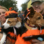 Debra and Mark Erml of Port Clinton, Ohio, hold their pets Lucky Jack, a Jack Russell Terrier, left, and Buddy a terrier mix — both rescue dogs, in the pet costume contest at  the 40th Ann …