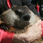 Lana Laughbaum holds Punxsutawney Phil  legendary for his Feb. 2 forecasts every year. Both are from Punxsutawney, Pa.