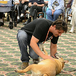 Greg Willey, from Friendship APL, shows off Carmen's skills at Wesleyan Village onAug. 15.  Carmen is one of the dogs up for adoption at Friendship APL. KRISTIN BAUER | CHRONICLE