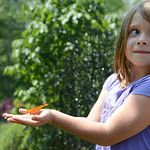 Lauren Kelleher, 6, of Avon, reacts after a butterfly landed on her hand at the Miller Nature Preserve Butterfly House on July 31.   KRISTIN BAUER | CHRONICLE