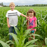 Trenton Horner, 10, and his sister Addison, 7, of Tiffin, stand in the cornfield with a yard stick measuring the corn's height at their grandfather's, Ron Pickworth, farm.  KRISTIN BAUER | C …