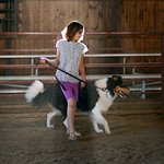 Jessica Campbell, 12, of Medina practices with her dog Sam before the dog obedience competitions this upcoming weekend at the Medina County Fair. KRISTIN BAUER | CHRONICLE