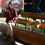 Kaitlyn Praisler, 12, of West Salem, practices having her dog Honey jump onto the bleachers at the Medina County Fair. KRISTIN BAUER | CHRONICLE
