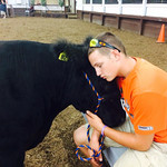 Matthew Kelling and his steer, Gus, take a rest after a long afternoon at the fair.