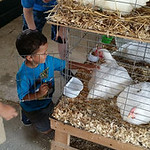 Cameron Jackson, 3, pets the chickens.