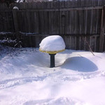 The bird bath is full in Terri Logar's East 30th Street backyard in South Lorain.