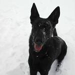 Crystal Burns' 10-month-old German Shepherd, Millie, is enjoying the snow on Feb. 5.