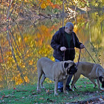 10/18/09 Angel Velez of Elyria lets his dogs do some sniffing as they walk alon the bakn lf the Black River in Cascade Park. Phofo by Tom Mahl
