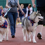 "Fans walk their dogs around Progressive Field before a baseball game between the Kansas City Royals and the Cleveland Indians Monday, June 17, 2013, in Cleveland. The Indians held their ""Pup …"