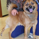Beamer, Erie Shores Humane Society in Elyria