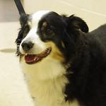 Sheila, Friendship APL of Lorain County