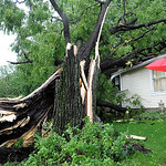 Summer Rayne Dobbins, 4, front, and her sister Icie Dawn, 9, of Elyria, look over  black walnut tree which fell on the house of her grandparents, Fay and  William Earl, of Rt. 82 Royalton Rd …
