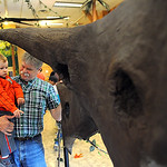 Tom Palmer, with his great-nephew Carson Oswalt, 2, of Vermilion, check out the triceratops the Lorain County Metro Parks 'Dinosaurs!' exhibit at Carlisle Reservation on April 17.  The dinos ...
