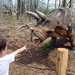 Hudson Decker of Vermilion checks out the triceratops at the Lorain CountyMetro Parks 'Dinosaurs!' exhibit at Carlisle Reservation on April 17. The dinosaurs are remnants from the Prehistori ...