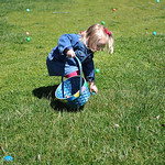 Addison Foy, 2, of Avon, searches for Easter eggs during the egg hunt Saturday afternoon. KRISTIN BAUER/CHRONICLE