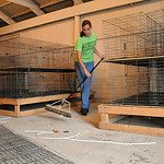 Mackenzie Calfo, of Wellington and the Lorain County Dairy Club and Junior Fair board member, sweeps out the Junior Fair Fowl barn at Lorain County Fairgrounds on Aug. 11. STEVE MANHEIM/CHRO …