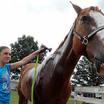 Taylor Michael, of New London and Lorain County Satellites 4-H, washes her quarterhorse. Mikey, after winning grand champion in the 9-13 Horsemanship class.  STEVE MANHEIM/CHRONICLE