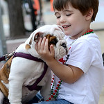 While at the annual Oberlin Chalk Walk, Jeremiah McCreary, 3, of Collins, plays with — and curiously examines — the face of Russell, an 8-week-old bulldog pup Saturday morning. KRISTIN B …