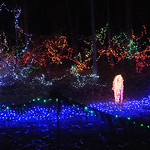 Holiday lights return at Finwood Estate in Elyria on Dec. 5.   Steve Manheim