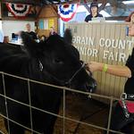 Lauren Fehlan, of Wellington, with her Grand Champion Mod Beef Steer at the Jr. Fair Livestock Auction, Market Beef, at Lorain County Fair Aug. 28.  Steve Manheim