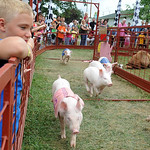 Steven Delcampo of Rocherster Twp. watches the pig races at the Lorain County Fair Aug. 24.  Steve Manheim