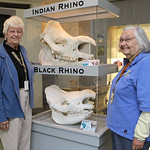 In this Tuesday, Oct. 5, 2010 photo, volunteers Betty Wuest, left, of Westwood, Ohio, and Janet Morgan of Dent, Ohio, pose next to Indian and African rhinoceros skulls as they watch Nikki th …