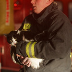 8FEB11 Fire, N. Ridge Rd (254 & Liberty Ave. 2343 N. Ridge Rd) A firefighter holds a pet cat after it was treated in the ambulance.  photo by Chuck Humel