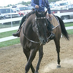 """Amanda Yaworsky, 11, of Wakeman, Ohio, practices her walk/trot with Honcho, an Appaloosa. """"He's just a pasture horse that she's been working on since March,"""" said her mother, Angie Yaworsky, …"""